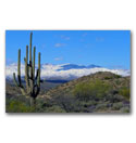 Photo of a large saguaro cactus and some rare snow in the desert in the Superstition Wilderness just to the east of the Phoenix Arizona metropolitan area